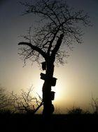 Gegenlicht-Baum