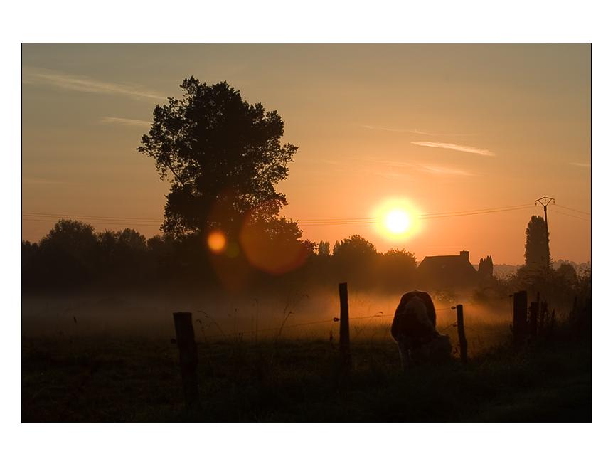 Gegenlicht im Morgengrauen