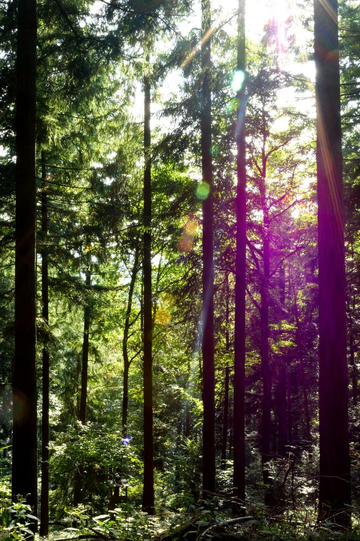 Gegenlicht im Schwarzwald
