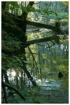 Gegenlicht im Waldwasser