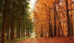 Gegensätzliches im Herbstwald