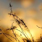 Gegen.s.Licht - Januar.Sonne ...´15
