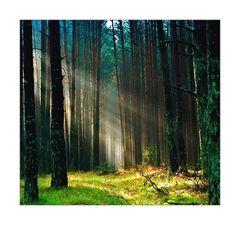 Geh mit den Gedanken dieser großen Dichter in den Wald und lasse sie auf dich wirken.