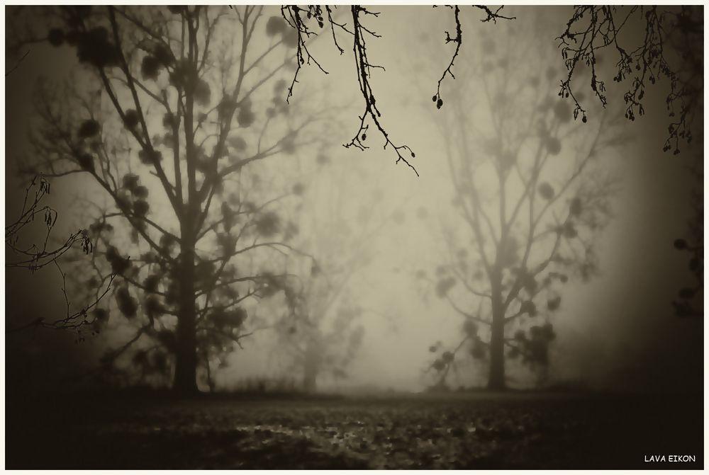 Gehe ruhig einmal mitten durch den Nebel...
