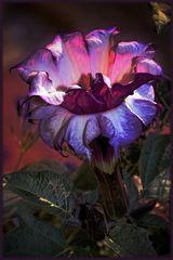 *Geheimnisvolle Blüte*