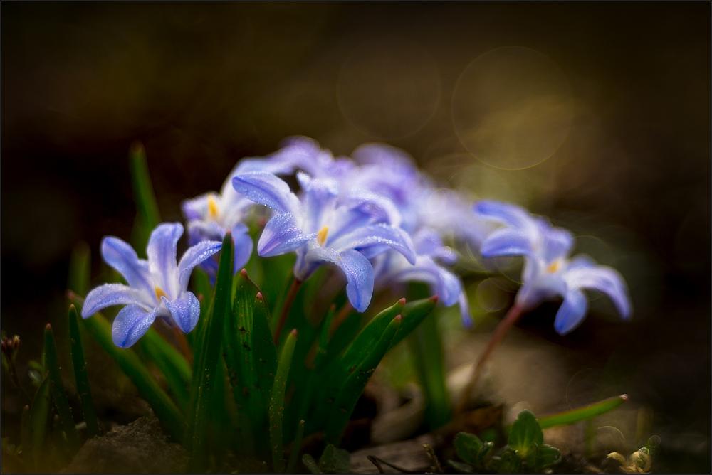 Geheimnisvolle Gartenelfen Foto Bild Natur Kreativ
