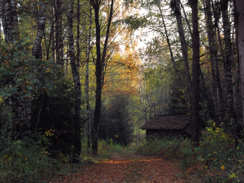 geheimnisvoller Herbstwald