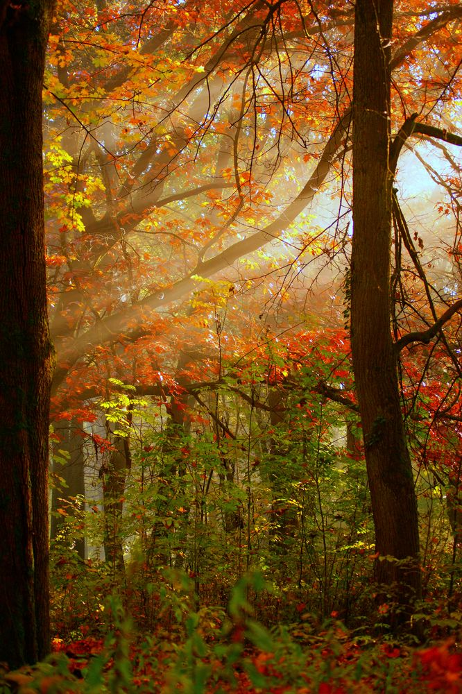 Geheimnisvoller Morgen Nebelhauch