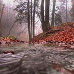 Geheimnisvoller Wald