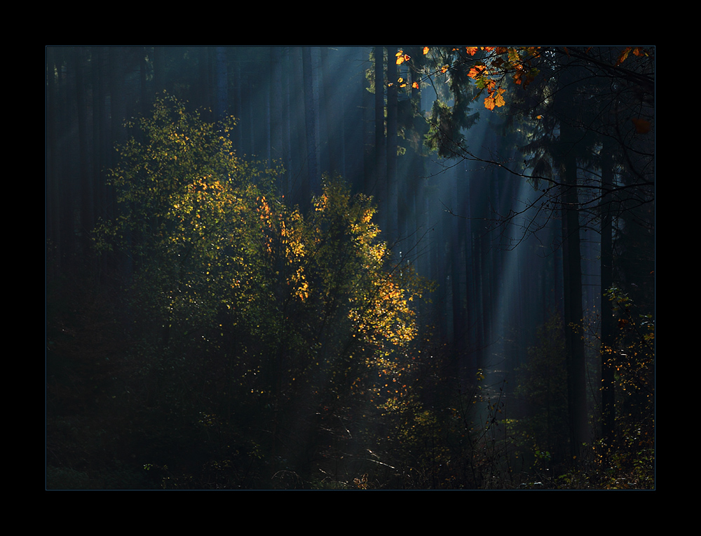 Geheimnisvolles Licht...