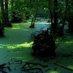Geheimnisvolles Moor in den Donauauen / Altwasserarm