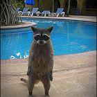 Gehst du jetzt mit mir in den Pool....