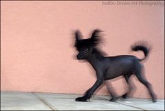 """Geisterhund"" ;-)"