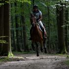 Geländeritt -Waldweg-
