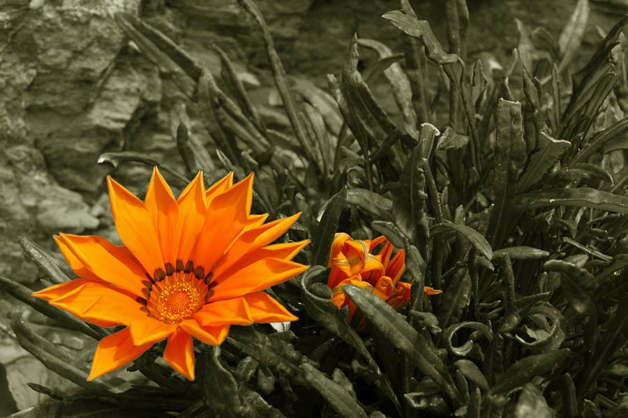 Gelb allein macht Glücklich