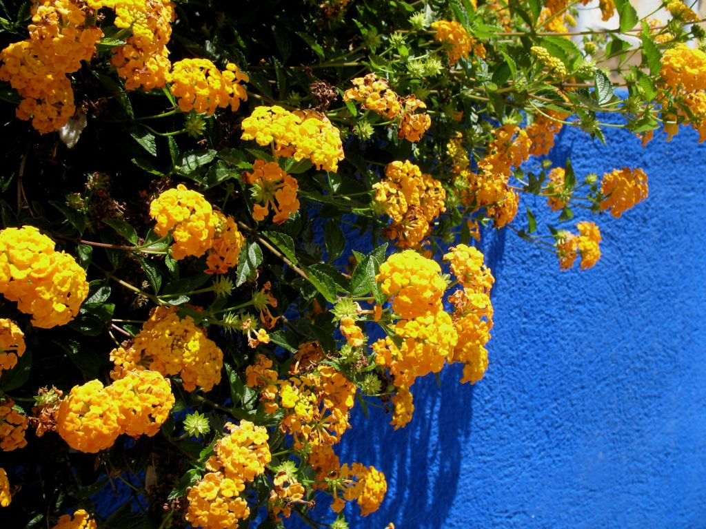 gelb auf blau