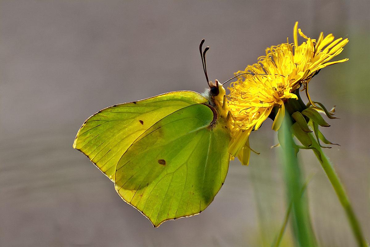 Gelb auf gelb