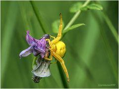 gelb auf violett.....