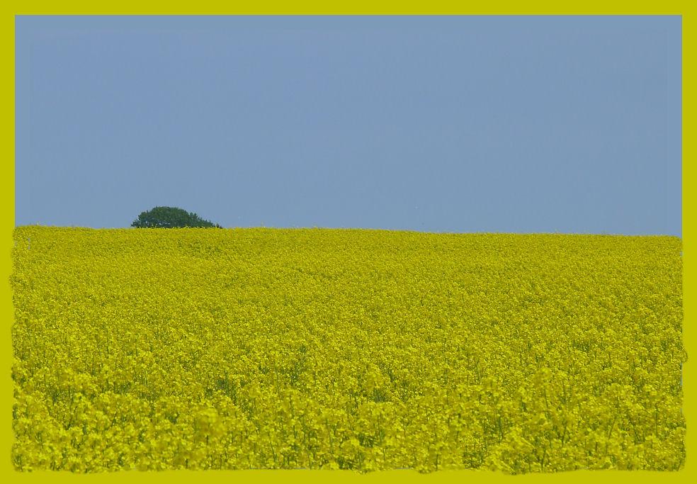 Gelb - Blau