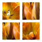 gelb collage 1
