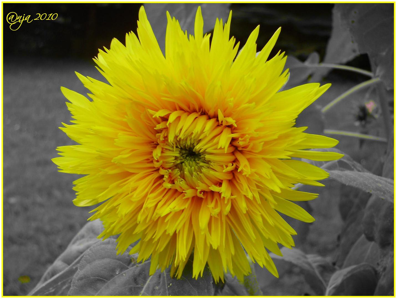 - gelb - die Farbe des Sommers