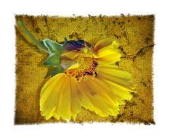 Gelb gegen Grau