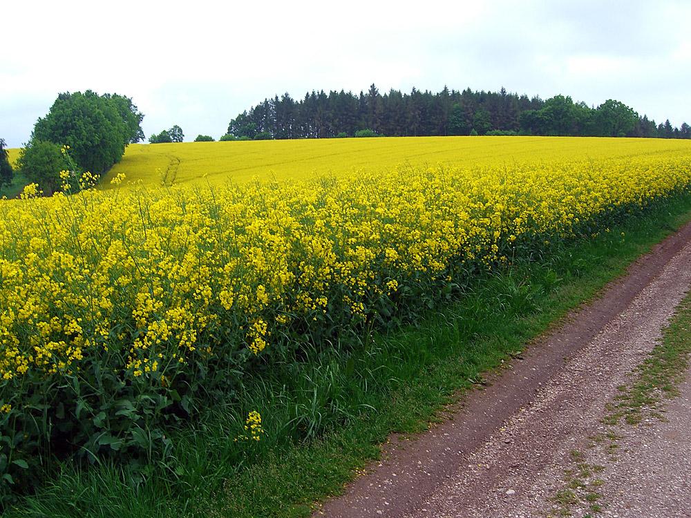 Gelb -gelb-gelb