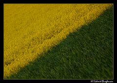 Gelb-Grün... Grün-Gelb
