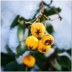 Gelb im Winter
