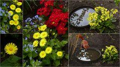 """""""Gelb"""" in unserem Garten"""