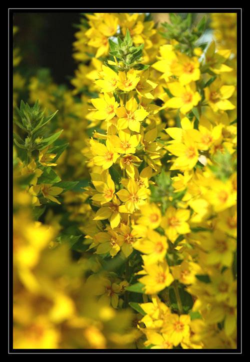 Gelb in voller Kraft
