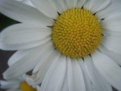 gelb in Weiß