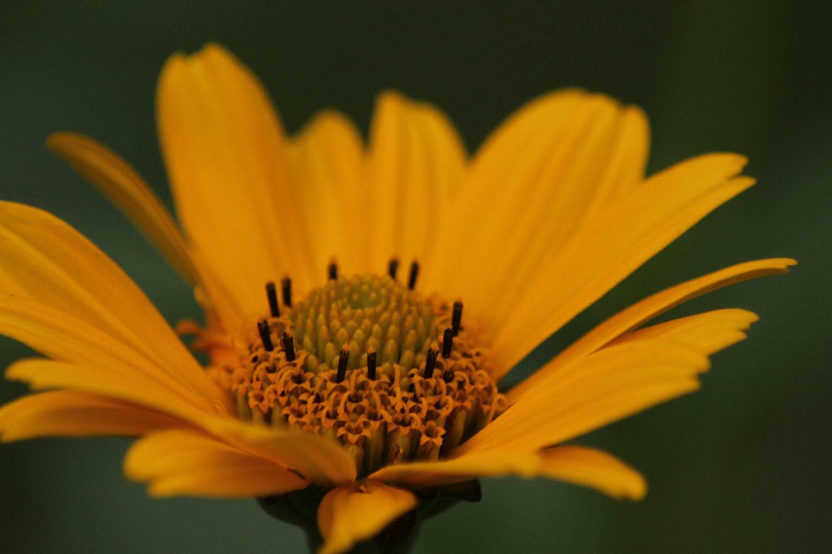 Gelb ist alles was Schön ist