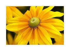 Gelb macht glücklich!