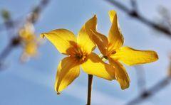 Gelb oder Leben