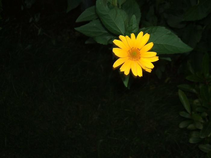 gelb photograph sebastian stroh 9 jahre foto bild pflanzen pilze flechten bl ten. Black Bedroom Furniture Sets. Home Design Ideas