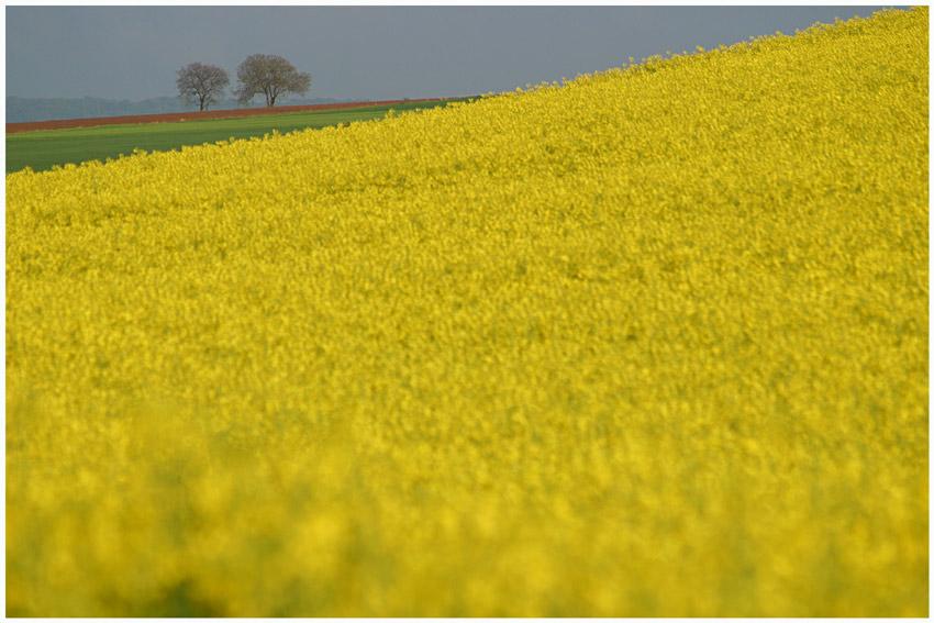 Gelb regiert