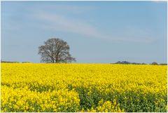 Gelb und ein herrlicher Duft