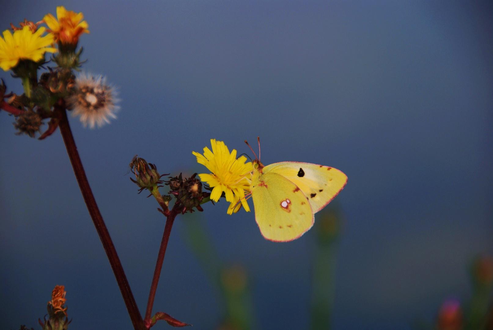 Gelb und Gelb