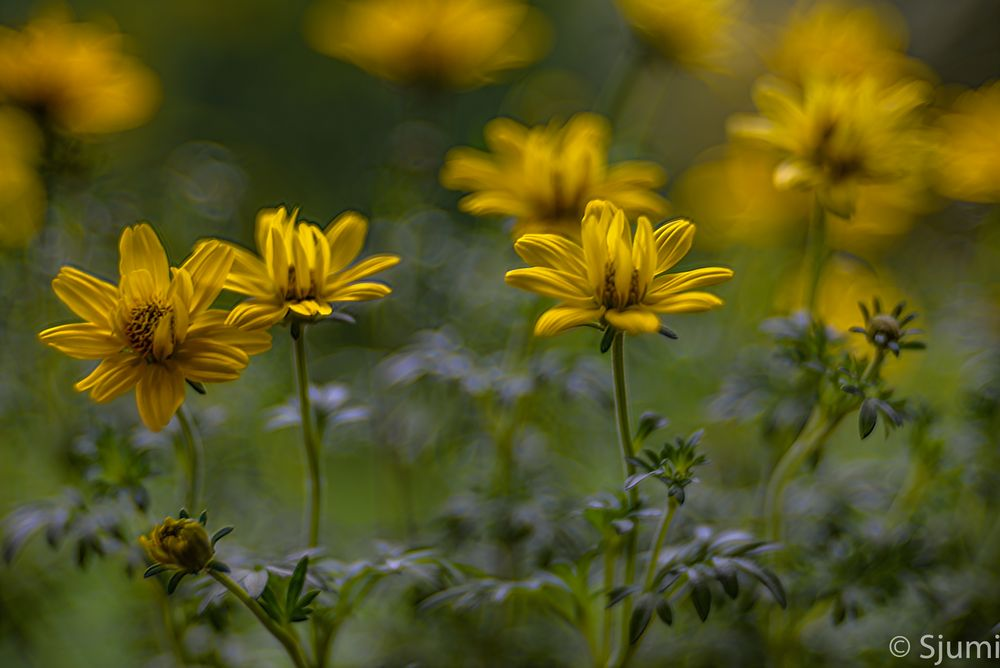 Grün Gelb