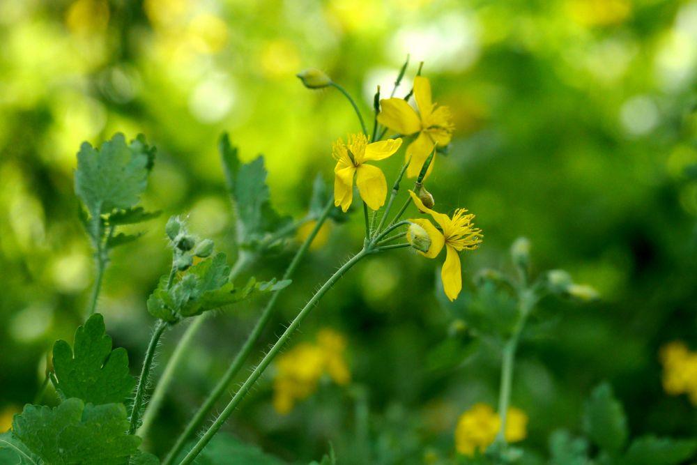 Gelb und Grün im Frühling