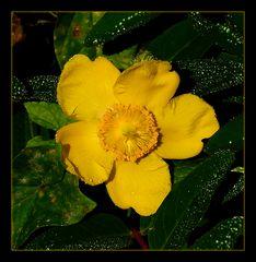 ...gelb und mittig