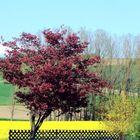 Gelb und Rot am Jägerzaun