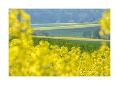 Gelb (und Weiß): Freude...