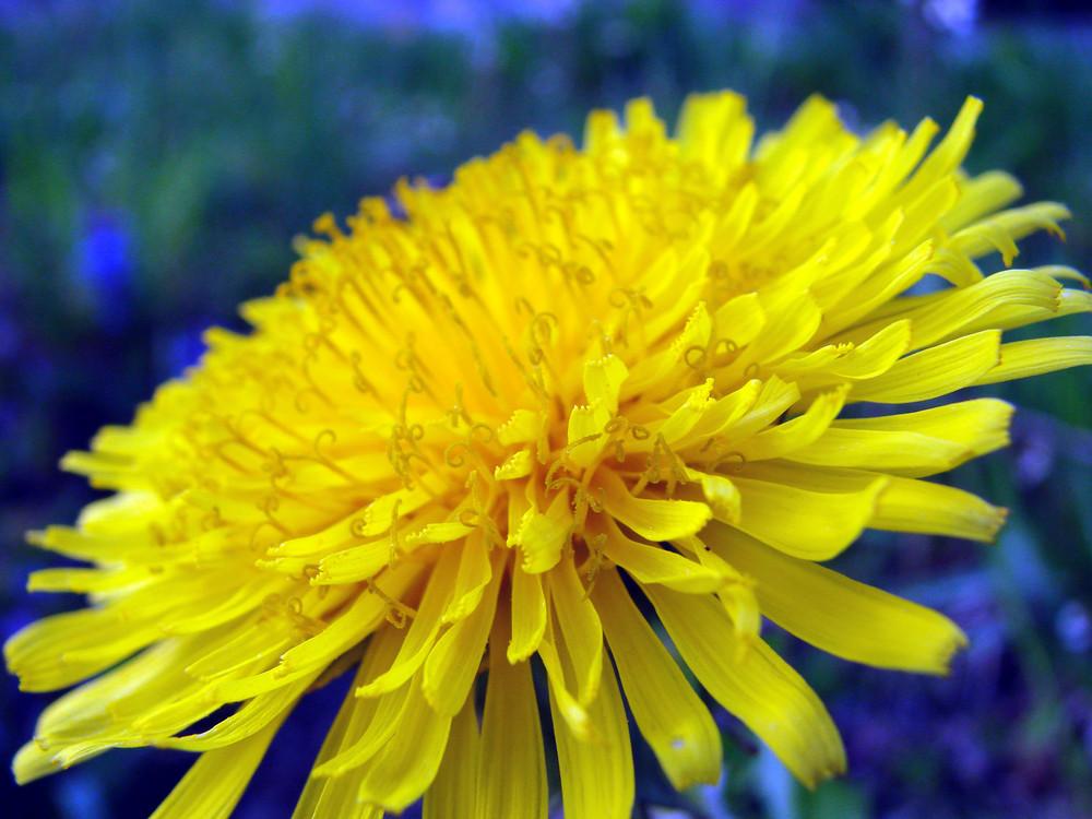 Gelb und Wunderschön