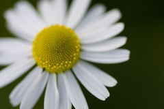 gelb - weiß
