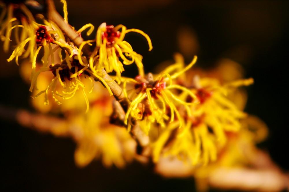 Gelb - Yellow