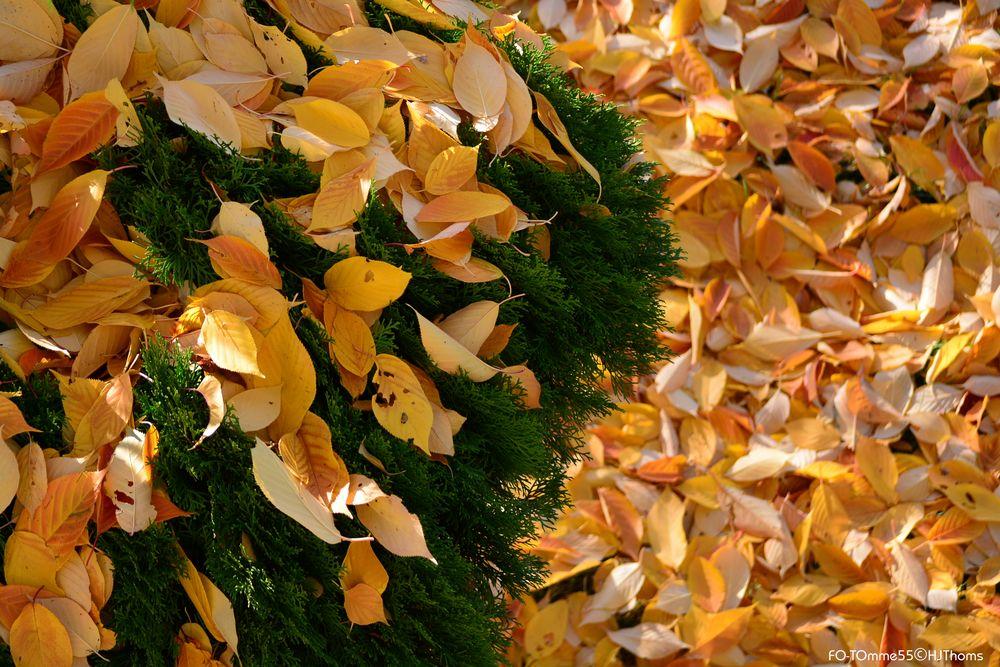 Gelbe Blätter II