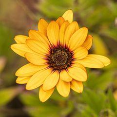 gelbe Blüte-2185