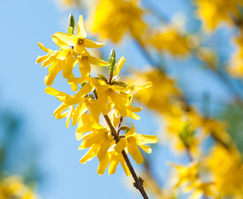 Gelbe Blüten auf blauem Grund